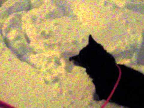 3RD SNOWFALL IN YOKOHAMA