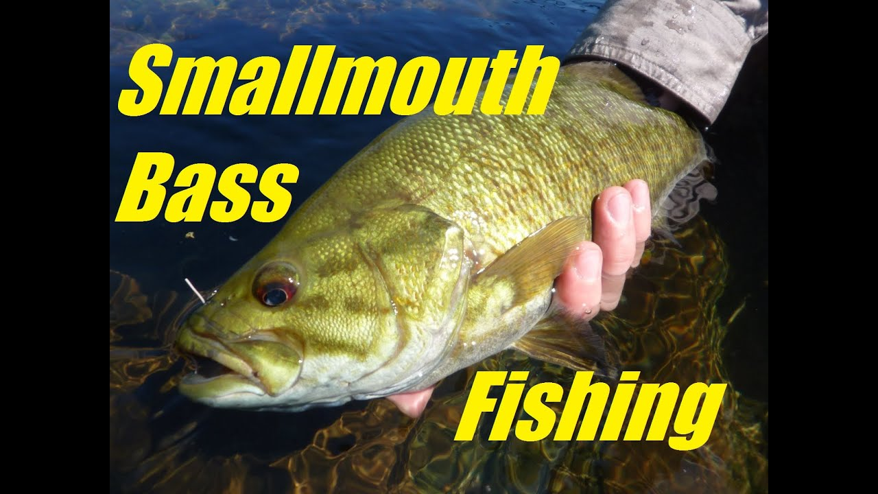 for Bass fishing youtube