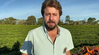 2° passada de colhedora de café no Cerrado regulada para colher apenas cereja e com poucos danos as plantas
