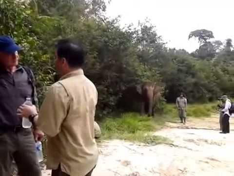 Area Gajah , Taman Nasional Tesso Nilo RIAU