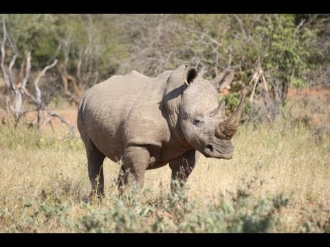 South African Rhino Poaching