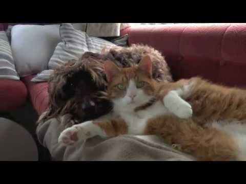 AnimalWise: Emotions Cats & Dogs - Surprise