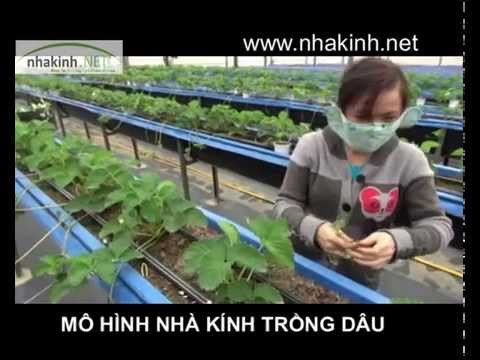 Trồng dâu trong nhà kính, Nhà kính nông nghiệp công nghệ cao