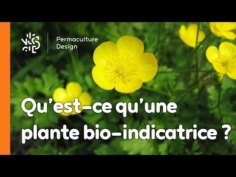 La minute permaculture #8 : QU'EST-CE QU'UNE PLANTE BIO-INDICATRICE ?