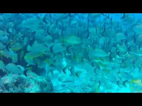 The Curch's Reef Cancun.mov