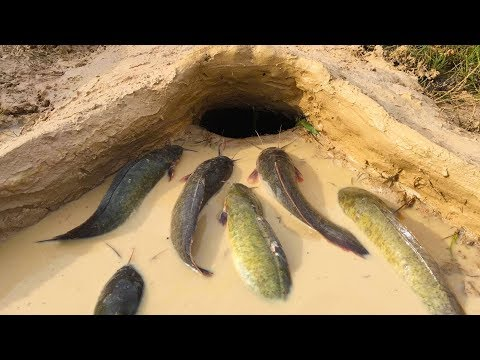 Amazing Muddy soil Hole Trap  Smart Man Build Fish Trap By Muddy soil Get Alot of Fish 100