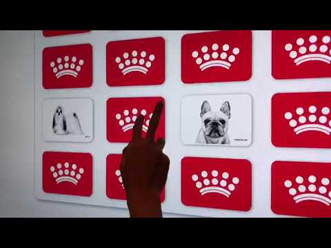 Cute Dogs Puzzle Matching Game with Touch Screen TV Rental