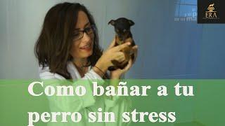 Bañar, limpiar orejas y cortar uñas del perro
