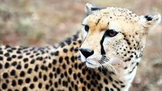 Animais A Beira Da Extinção Na África E No Mundo