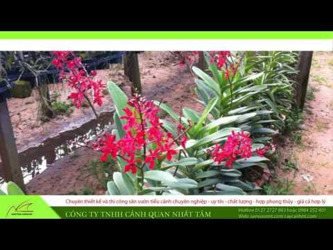 Những mẫu vườn lan đẹp