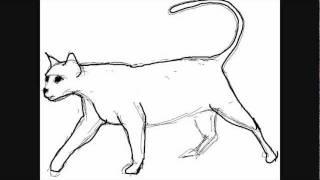 Katze Zeichnung Online Zeichnen Lernen Youtube