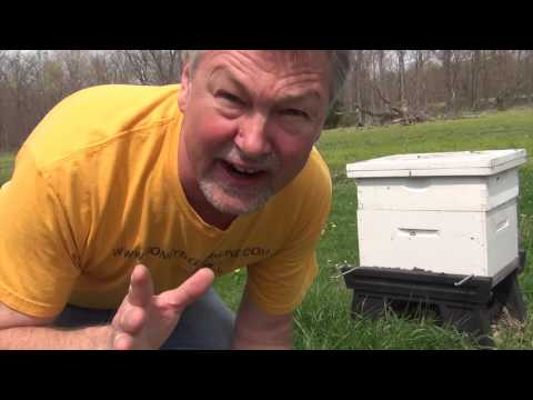 Beekeeping : How To Strengthen A New Split