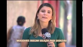Saracura vem tirando o sono de moradores do Bairro Santa Tereza