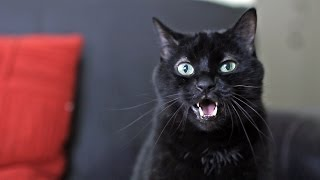 N2 The Talking Cat What Does The Cat Say? (What Does The