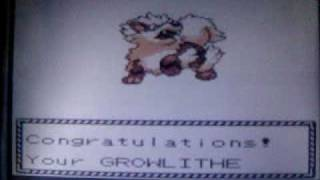Getting An Arcanine In Pokemon Crystal