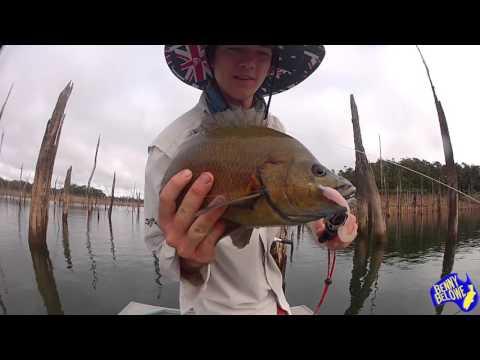 Sooty Grunter Fishing - Koombooloomba