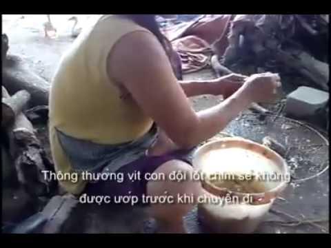 Chim sẻ Bẩn ở Việt Nam nếu bạn chưa biết hãy xem qua.