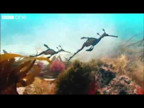 BBC Nature - David Attenborough - Wonderful World -xTvD6ldMDfI