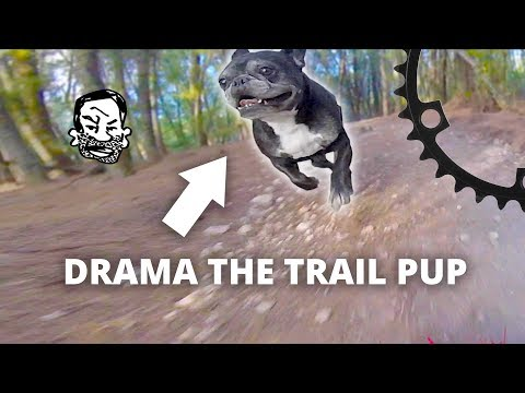 The worst MTB trail dog in the world