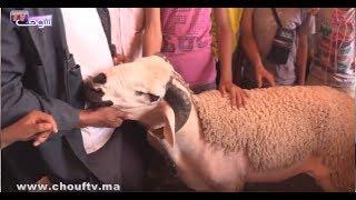 بالفيديو: شوفو أكبر حولي بفاس وها الثمن ديالو  