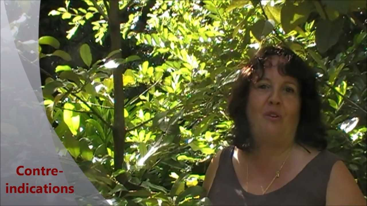 Aromath rapie l 39 he de noix de muscade lydia bosson - Noix de muscade cuisine ...