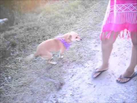 ¿ Puede Salvarse un perro del Parvovirus Canino ?