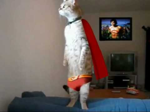 Standing Cat