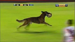 شاهد: لاعبون يطاردون كلب اقتحم مبارة لكرة القدم | قنوات أخرى
