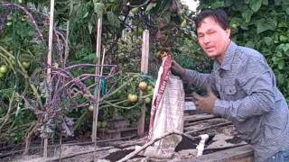 Best Way To Enrich Your Garden Soil To Grow Bigger And