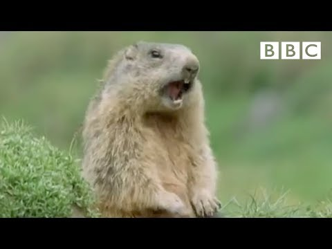 funny talking animals   walk on the wild side preview   bbc one   youtube