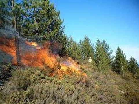Government Can No Longer Fight Wildfires?