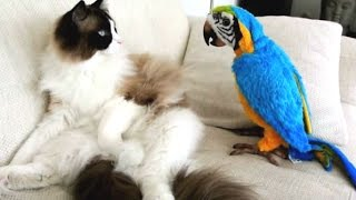 Funny Parrots Annoying Cats Compilation || NEW HD