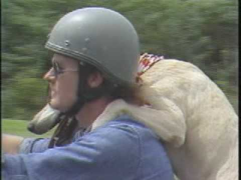 Thumbnail image for 'Hop on My Motorcycle, Dog'