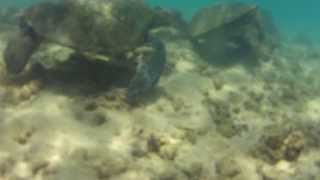 Underwater Graffiti Rock - Caleb Aero Video