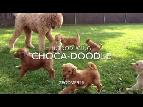 Choca-Doodle 2 in 1 Conditioning Shampoo
