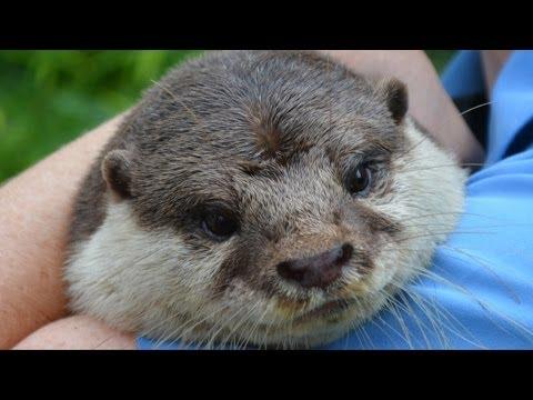 SeaWorld Orlando Summer Preview w/ Animal Ambassadors Incl. Otter, Owl, Light up the Night