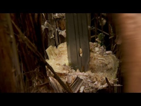 Slurpin' Banana Water | Dual Survival