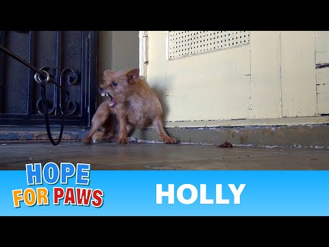 0 Rescuing a terrified abandoned dog   The transformation will amaze you! Please share.