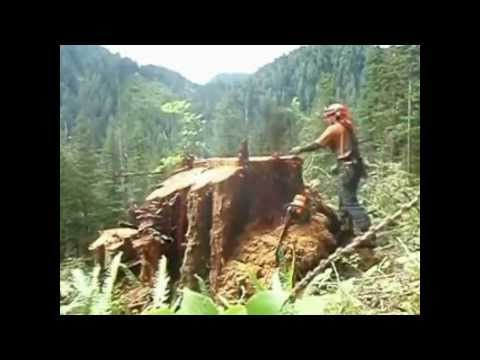 Apeo, cortando arboles en Oregon, Canadá y Alaska. Cutting big trees