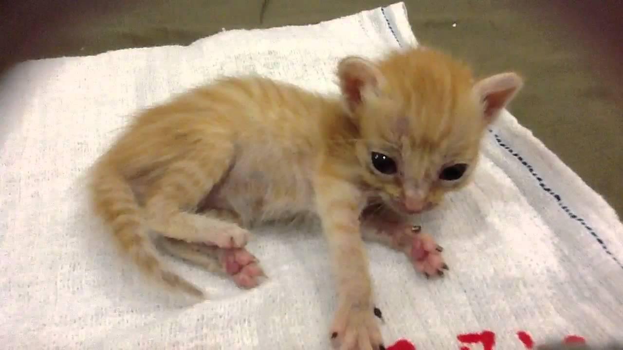 smallest kitten ever youtube