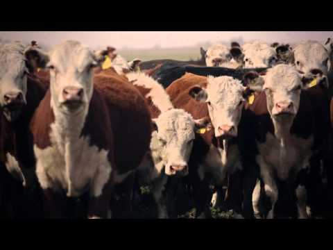 Grass, Water, Cows  | The Perennial Plate's Real Food World Tour