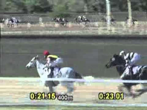 Vidéo de la course PMU GRAN PREMIO HIPODROMO DE PALERMO