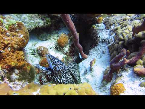 Spotted Moray Eel, Lost Blue Hole, Nassau, Bahamas