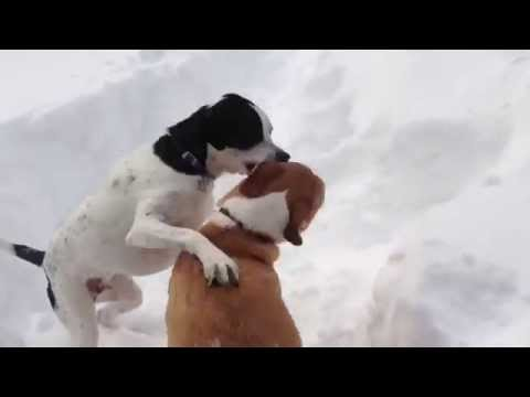 Dogs in snow playing chicken