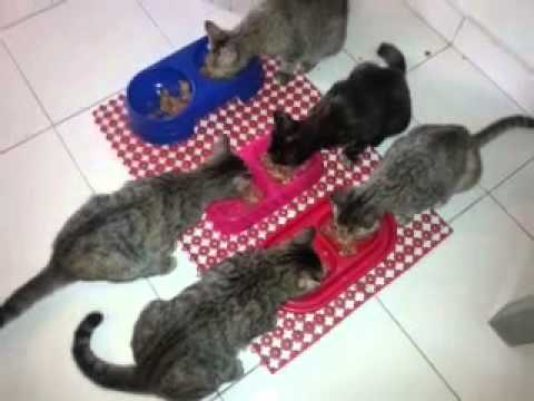 Kittens ~ yeah! Wet food for breakfast!