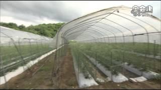 ミニ番組 「昭和村のかすみ草」