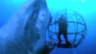 World's Largest Shark/Animal Ever CAUGHT ON CAMERA THE