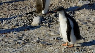 Penguin Poop Natural World: Penguin Post Office: Preview
