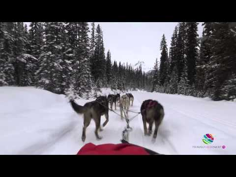 Kingmik Dog Sled Tours, Lake Louise, Alberta, Canada