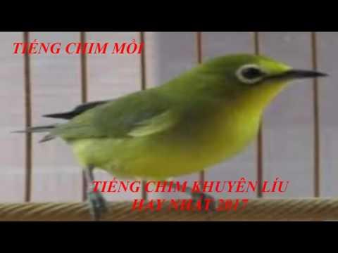 Tiếng chim mồi - Tiếng chim khuyên mồi hay nhất 2017 \